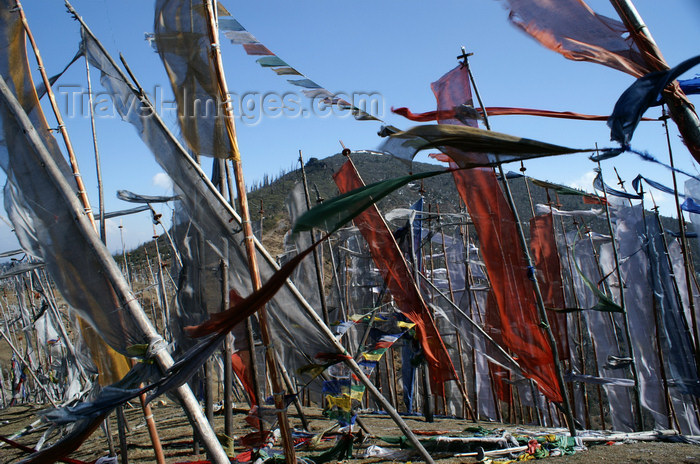 bhutan167: Bhutan - forest of prayer flags, at Chele La - photo by A.Ferrari - (c) Travel-Images.com - Stock Photography agency - Image Bank