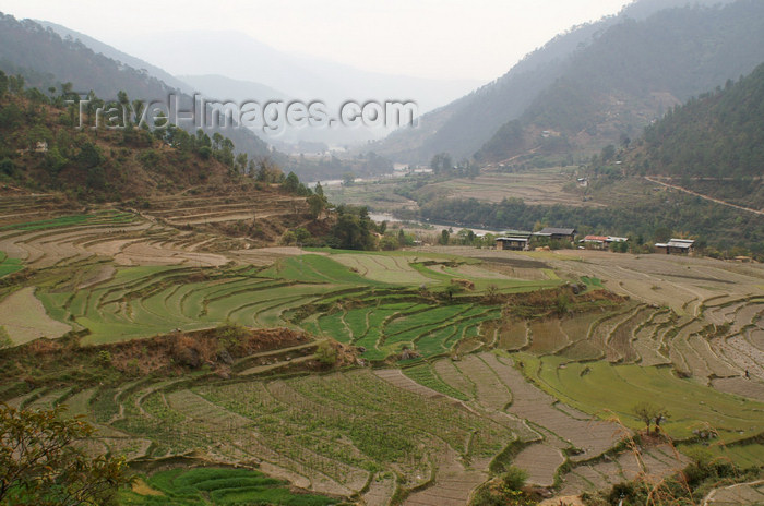 bhutan284: Bhutan - terraced fields - landscape on the way to Khansum Yuelley Namgyal Chorten - photo by A.Ferrari - (c) Travel-Images.com - Stock Photography agency - Image Bank