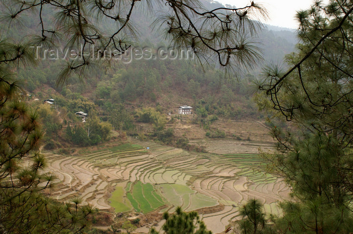 bhutan285: Bhutan - rice paddies - on the way to Khansum Yuelley Namgyal Chorten - photo by A.Ferrari - (c) Travel-Images.com - Stock Photography agency - Image Bank