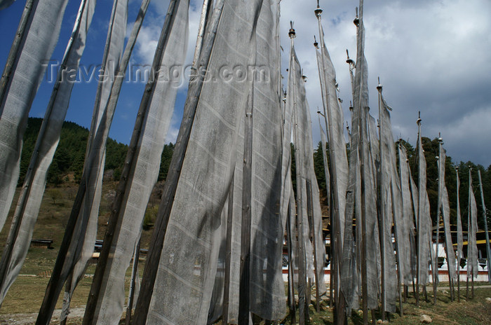 bhutan337: Bhutan - Prayer flags, between Zangto Pelri Lhakhang and Kurjey Lhakhang - photo by A.Ferrari - (c) Travel-Images.com - Stock Photography agency - Image Bank
