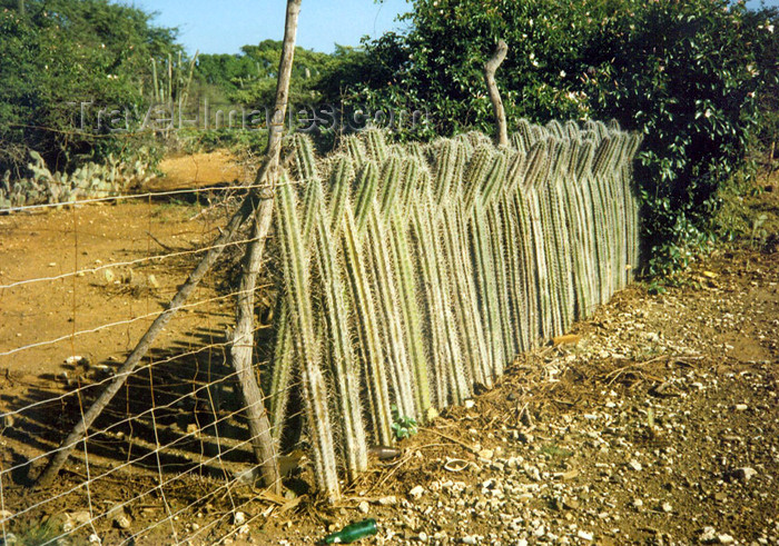 bonaire3: Bonaire/ BON: cactus used as fencing - photo by G.Frysinger - (c) Travel-Images.com - Stock Photography agency - Image Bank