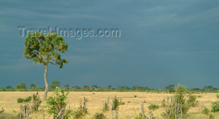 botswana34: Chobe National Park, North-West District, Botswana: stormy day in the  savannah - dark sky - photo by J.Banks - (c) Travel-Images.com - Stock Photography agency - Image Bank