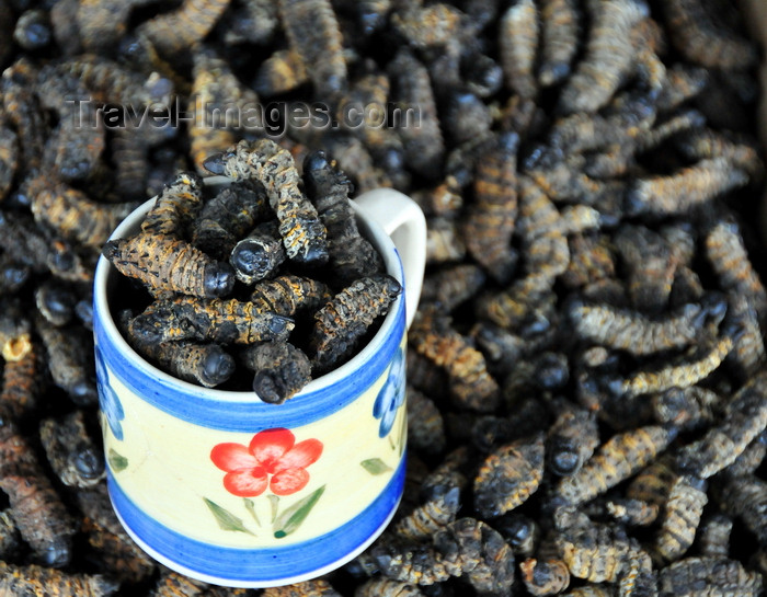 botswana37: Gaborone, South-East District, Botswana: larval insects - snacks for sale - Botswana, Gaborone - photo by M.Torres - (c) Travel-Images.com - Stock Photography agency - Image Bank
