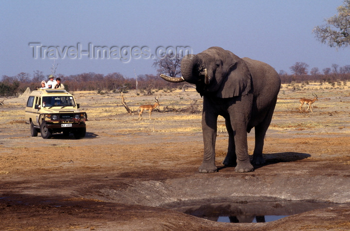 botswana82: Chobe National Park, North-West District, Botswana: a bull elephant drinks from a manmade watering hole in the Savuti Marsh - Toyota 4wd with photo safari tourists in the background - photo by C.Lovell - (c) Travel-Images.com - Stock Photography agency - Image Bank