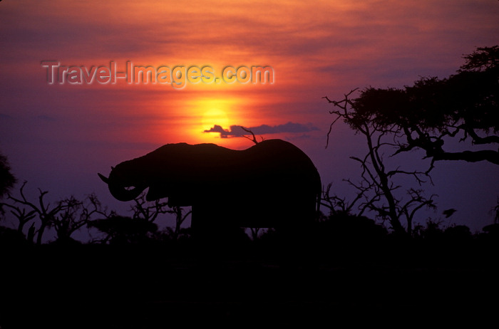 botswana83: Chobe National Park, North-West District, Botswana: sunset - silhouette of an elephant drinking at a watering hole in the Savuti Marsh- photo by C.Lovell - (c) Travel-Images.com - Stock Photography agency - Image Bank