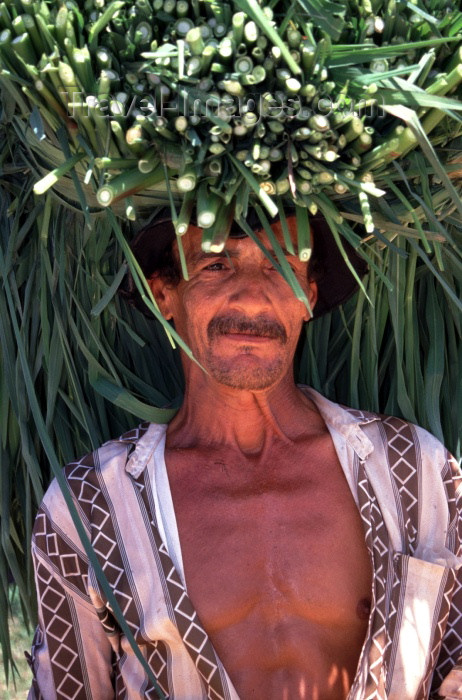 brazil106: Brazil / Brasil - Marrecas ranch / Fazenda Marrecas (Alagoas / AL): man transporting the cane on his head - farm worker / transportando a cana de açucar na cabeça - photo by F.Rigaud - (c) Travel-Images.com - Stock Photography agency - Image Bank