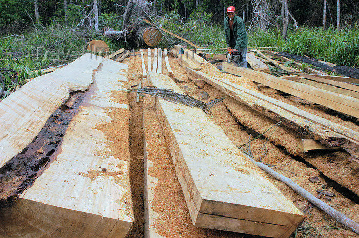 brazil133: Brasil - Amazonas: logging operation in the Amazonia - Castanheira wood - madeireiros (photo by M.Alves) - (c) Travel-Images.com - Stock Photography agency - Image Bank