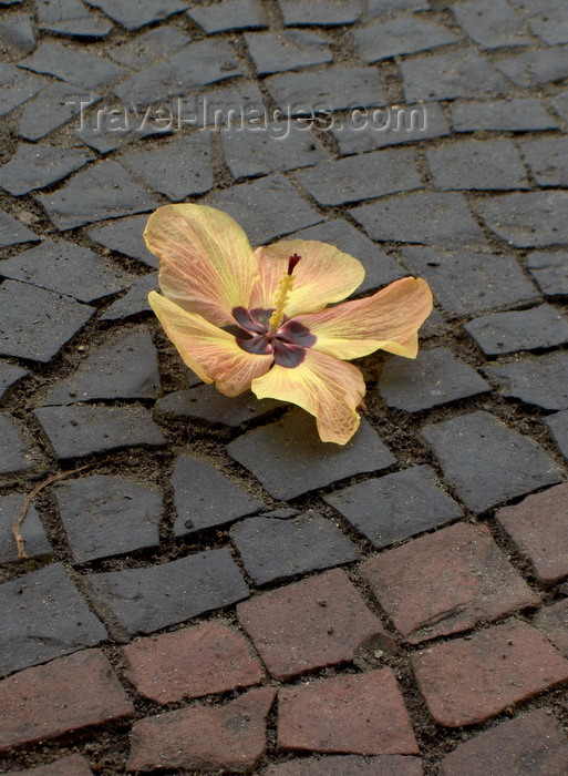 brazil463: Rio de Janeiro, RJ, Brasil / Brazil: Copacabana - flower on the pavement - Hibiscus / Hibiscus na calçada - photo by S.West - (c) Travel-Images.com - Stock Photography agency - Image Bank