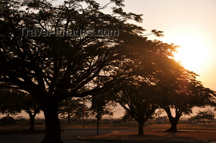 burundi3: Bujumbura, Burundi: tree silhouettes at sunrise - Bujumbura International Airport - BJM - photo by M.Torres - (c) Travel-Images.com - Stock Photography agency - Image Bank