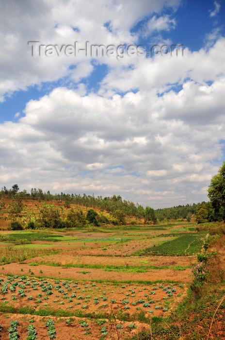 burundi48: Gitega / Kitega, Burundi: cultivated valley - agriculture along the RN 2 - photo by M.Torres - (c) Travel-Images.com - Stock Photography agency - Image Bank