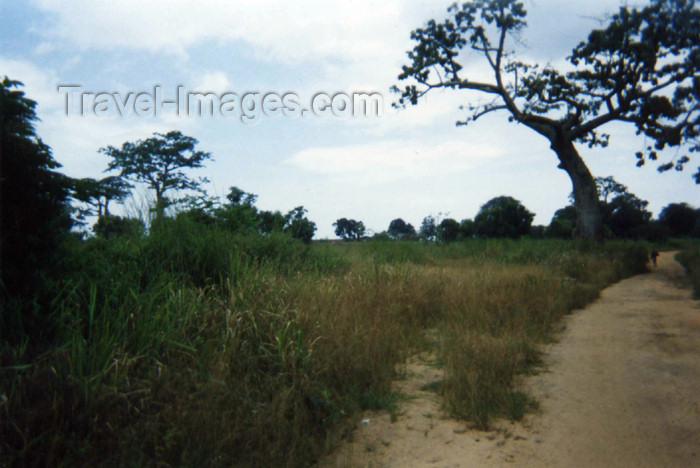 cabinda15: Cabinda: rural road / estrada rural (photo by FLEC) - (c) Travel-Images.com - Stock Photography agency - Image Bank