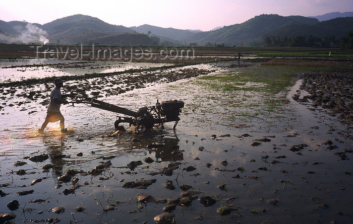 cambodia125: Siem Reap Province, Cambodia: ploughman in a paddy field at sunset - photo by E.Petitalot - (c) Travel-Images.com - Stock Photography agency - Image Bank
