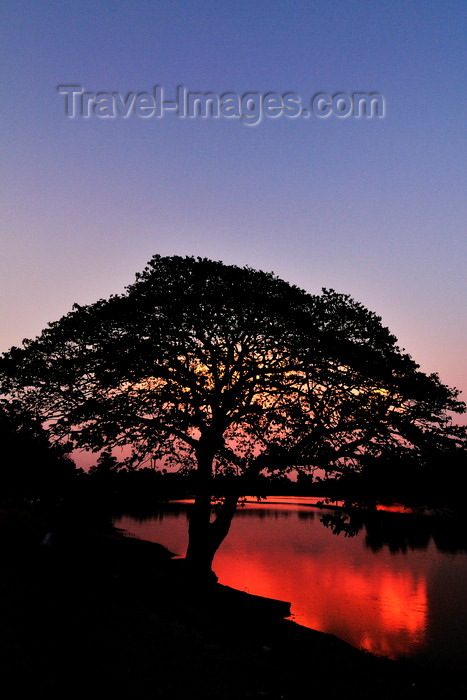cambodia134: Angkor, Cambodia: tree and pond at sunset - photo by J.Hernández - (c) Travel-Images.com - Stock Photography agency - Image Bank