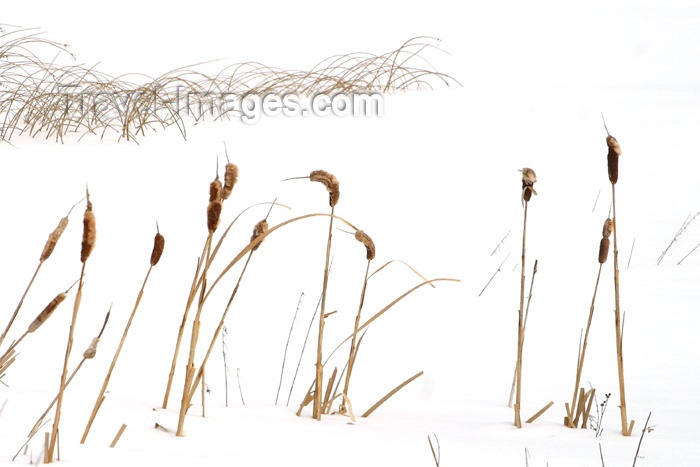 canada100: Canada / Kanada - Saskatchewan: winter scene - abstract on white background - photo by M.Duffy - (c) Travel-Images.com - Stock Photography agency - Image Bank