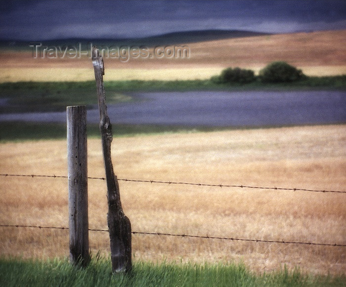 canada102: Canada / Kanada - Saskatchewan - Moose Jaw: old barbed wire fence, aged posts, crop in the field, trees on the hills - photo by M.Duffy - (c) Travel-Images.com - Stock Photography agency - Image Bank