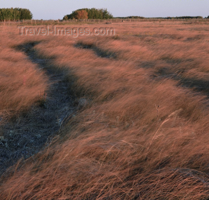 canada107: Canada / Kanada - Saskatchewan: tire tracks through a field - photo by M.Duffy - (c) Travel-Images.com - Stock Photography agency - Image Bank