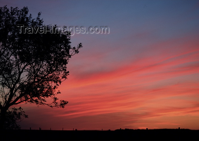canada108: Canada / Kanada - Saskatchewan: silhouette of a tree - beautiful red, blue, orange sunset - photo by M.Duffy - (c) Travel-Images.com - Stock Photography agency - Image Bank
