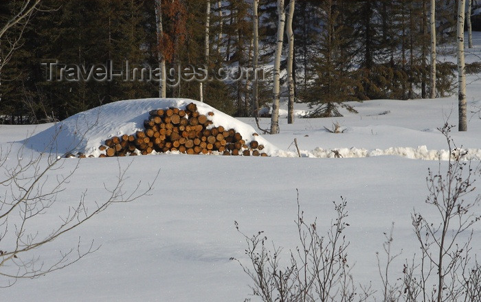 canada109: Canada / Kanada - Saskatchewan: pile of logs covered in snow - photo by M.Duffy - (c) Travel-Images.com - Stock Photography agency - Image Bank