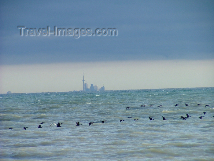 canada113: Vineland area, Ontario, Canada / Kanada: birds in migration, Toronto in view across lake Ontario - photo by R.Grove - (c) Travel-Images.com - Stock Photography agency - Image Bank