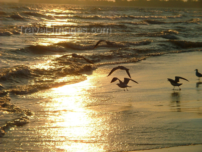 canada128: Vineland area, Ontario, Canada / Kanada: seagulls on golden sand - beach at sunset - photo by R.Grove - (c) Travel-Images.com - Stock Photography agency - Image Bank
