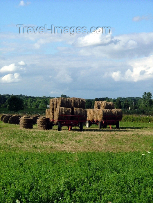 canada136: Pelham/Fenwick, Ontario, Canada / Kanada: after the harvest - round hay bales ready for transportation - photo by R.Grove - (c) Travel-Images.com - Stock Photography agency - Image Bank