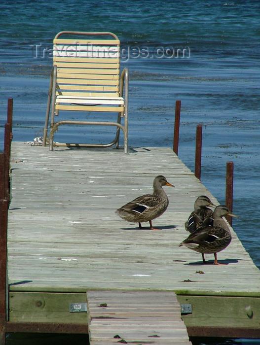 canada146: Canada / Kanada - Pelham - Niagara Region, Ontario: ducks on a pier - photo by R.Grove - (c) Travel-Images.com - Stock Photography agency - Image Bank