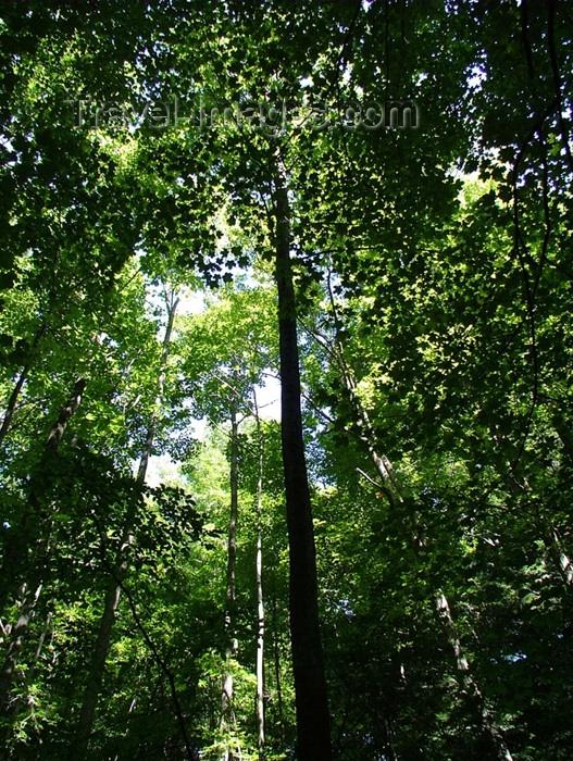 canada147: Canada / Kanada - Pelham / Fenwick, Ontario: dense forest - photo by R.Grove - (c) Travel-Images.com - Stock Photography agency - Image Bank