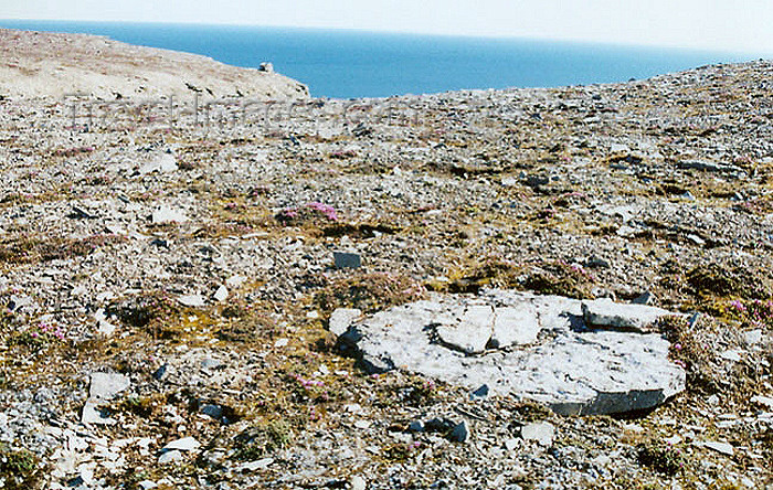 canada365: Prince Leopold island, Nunavut, Canada: vegetation - photo by G.Frysinger - (c) Travel-Images.com - Stock Photography agency - Image Bank