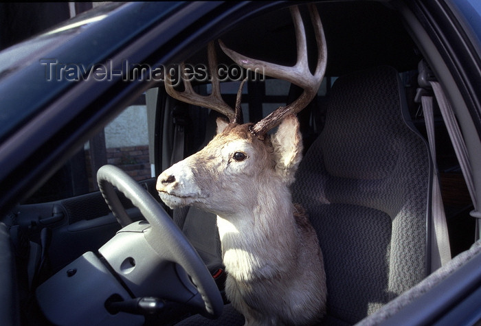 canada377: Canada / Kanada - Chemainus (BC): local driver - photo by F.Rigaud - (c) Travel-Images.com - Stock Photography agency - Image Bank