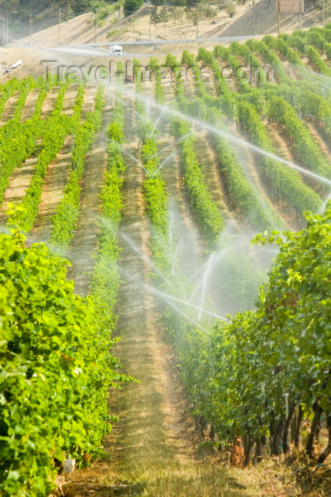 canada647: Okanagan Valley, BC, Canada: scenic vineyards - sprinkler irrigation - Canada is becoming a wine country - photo by D.Smith - (c) Travel-Images.com - Stock Photography agency - Image Bank