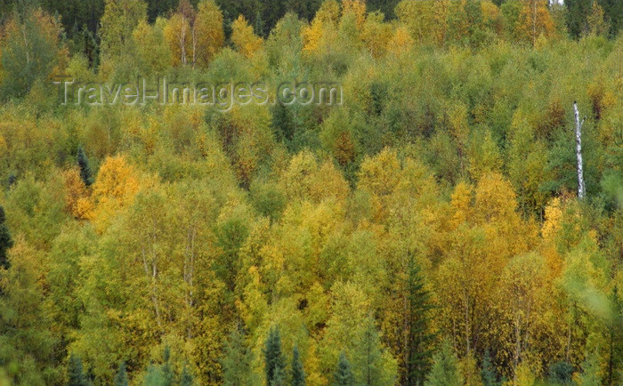 canada75: Canada / Kanada - Saskatchewan: beautiful fall colors in a scenic Northern Saskatchewan forest - photo by M.Duffy - (c) Travel-Images.com - Stock Photography agency - Image Bank