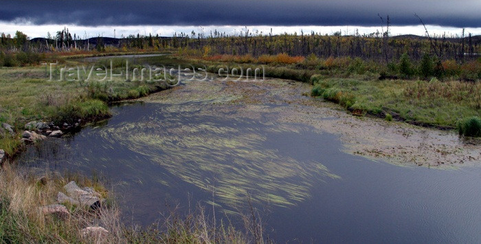 canada77: Canada / Kanada - Saskatchewan: in the marshes - photo by M.Duffy - (c) Travel-Images.com - Stock Photography agency - Image Bank