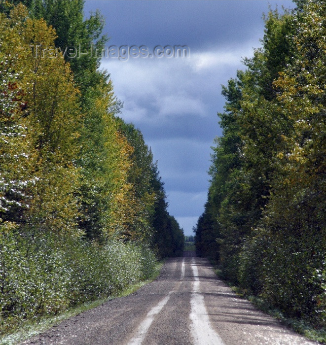 canada79: Canada / Kanada - Saskatchewan: secluded dirt road in Northern Saskatchewan used for lumbering industry - photo by M.Duffy - (c) Travel-Images.com - Stock Photography agency - Image Bank
