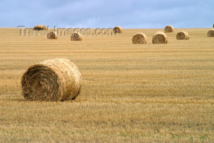 canada84: Canada / Kanada - Saskatchewan: hay bales in the field - photo by M.Duffy - (c) Travel-Images.com - Stock Photography agency - Image Bank