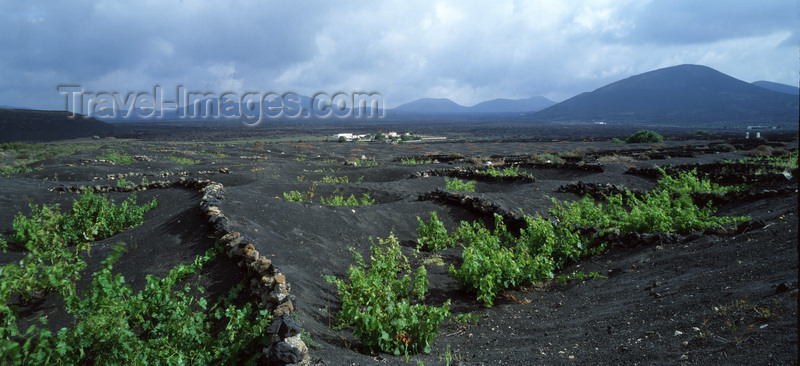 canary71: La Geria,  Lanzarote, Canary Islands: wine-growing in the volcanic ashes - vines - photo by W.Allgöwer - (c) Travel-Images.com - Stock Photography agency - Image Bank