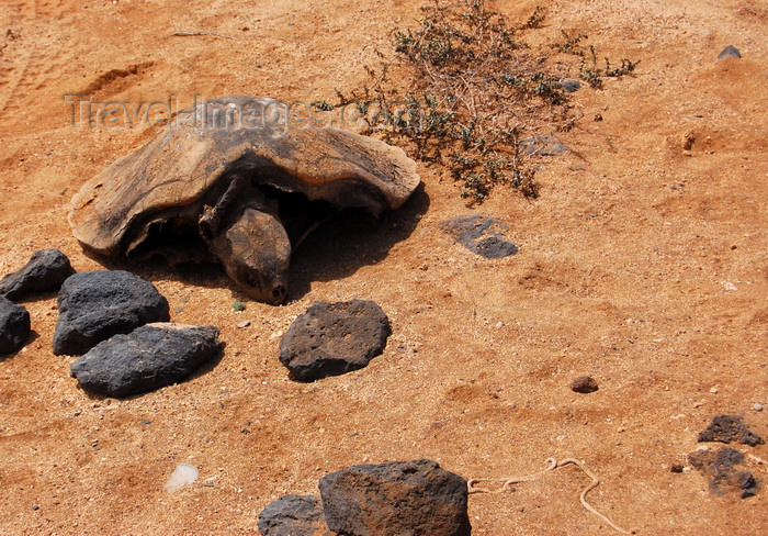 capeverde91: S.Maria, Sal island, Cape Verde / Cabo Verde: remains of a turtle - tartaruga morta - photo by R.Resende - (c) Travel-Images.com - Stock Photography agency - Image Bank