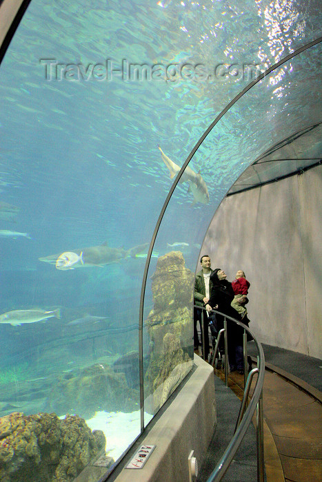 catalon116: Catalonia - Barcelona: the Aquarium - dedicated to the Mediterranean - underwater tunnel - L'Aquàrium de Barcelona - Moll d'Espanya - photo by A.Dnieprowsky - (c) Travel-Images.com - Stock Photography agency - Image Bank
