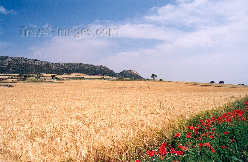 catalon21: Catalonia / Catalunya - Foradada, Noguera, Lleida province: the blond fields of Catalonia - wheat field and poppies - agriculture - cereal - photo by Miguel Torres - (c) Travel-Images.com - Stock Photography agency - Image Bank