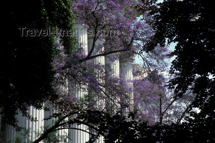 chile146: Santiago de Chile: mimosa blooms in front of the columns of the former National Congress, now the Ministry of External Relations - photo by C.Lovell - (c) Travel-Images.com - Stock Photography agency - Image Bank
