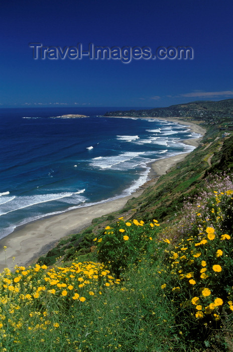 chile186: Cachagua, Valparaíso region, Chile: cliffs and flowers above the town - photo by C.Lovell - (c) Travel-Images.com - Stock Photography agency - Image Bank