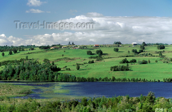 chile194: Chiloé island, Los Lagos Region, Chile: windswept pasture land with grazing sheep across an inlet – bucolic landscape - photo by C.Lovell - (c) Travel-Images.com - Stock Photography agency - Image Bank