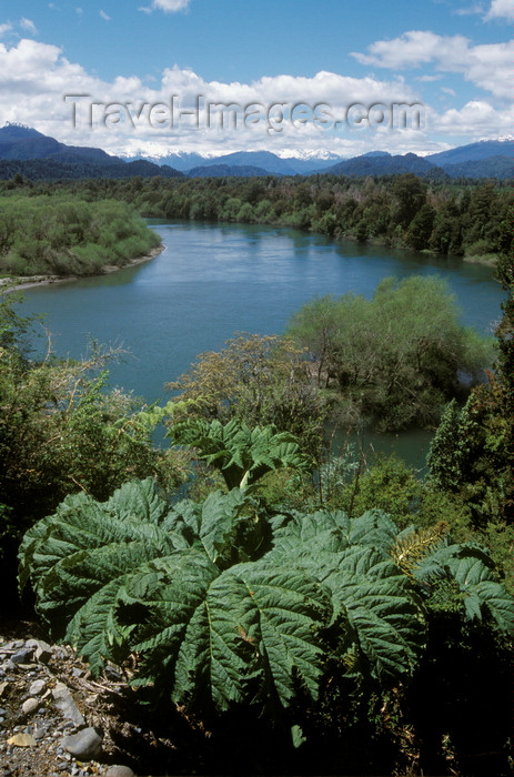 chile228: Aisén , Chile: river along the Camino Austral, a dirt road but the main route in northern Patagonia - rhubarb - photo by C.Lovell - (c) Travel-Images.com - Stock Photography agency - Image Bank
