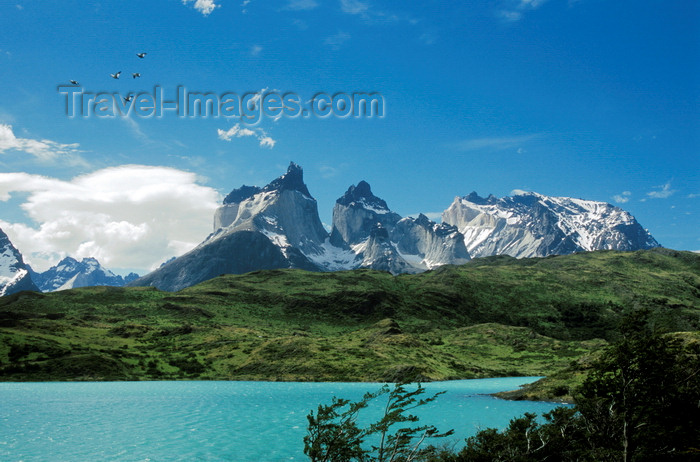 chile249: Torres del Paine National Park, Magallanes region, Chile: Cuernos del Paine - the Horns of Paine from Lake Nordenskjöld – ducks in flight - Chilean Patagonia - photo by C.Lovell - (c) Travel-Images.com - Stock Photography agency - Image Bank