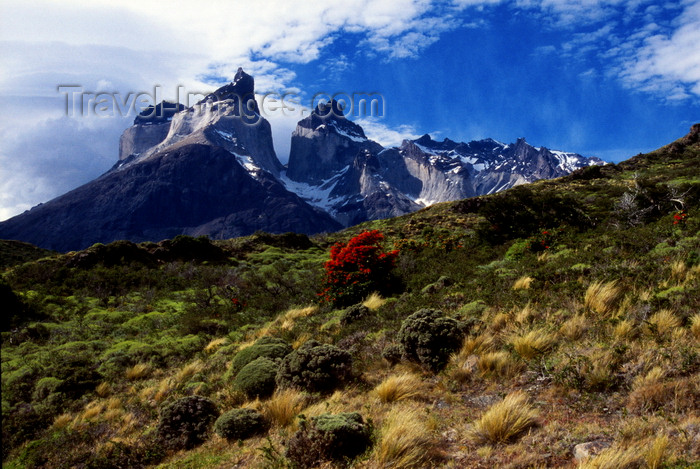 chile251: Torres del Paine National Park, Magallanes region, Chile: Cuernos Del Paine - the Horns of Paine and steppe vegetation - Chilean Patagonia - photo by C.Lovell - (c) Travel-Images.com - Stock Photography agency - Image Bank