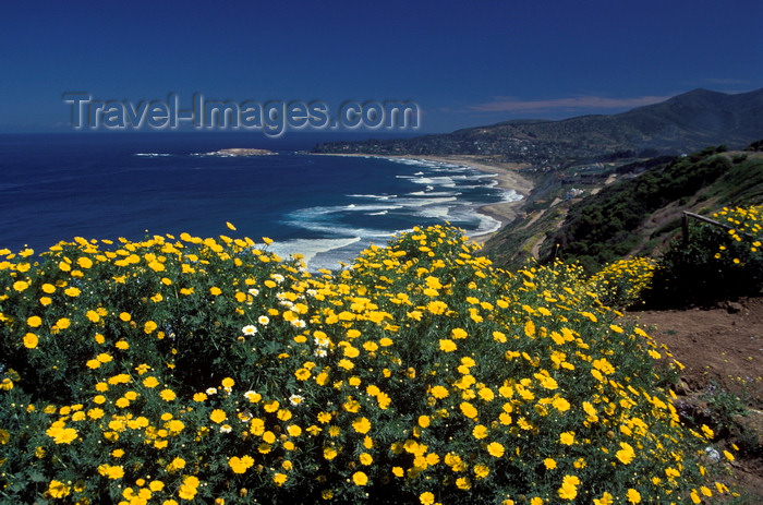 chile27: Cachagua, Valparaíso region, Chile: yellow flowers bloom in the spring above the town - photo by C.Lovell - (c) Travel-Images.com - Stock Photography agency - Image Bank