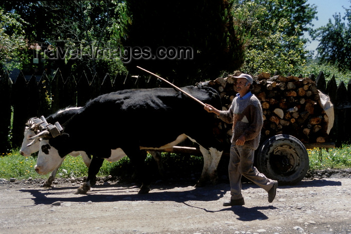 chile28: Rio Calle Calle valley, Valdivia, Los Ríos, Chile: man with oxen team and cart – rural scene - photo by C.Lovell - (c) Travel-Images.com - Stock Photography agency - Image Bank