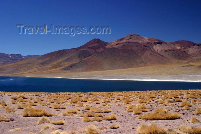 chile69: Chile - Atacama Desert/ deserto de Atacama:  lagoon - Laguna altiplánica - photo by N.Cabana - (c) Travel-Images.com - Stock Photography agency - Image Bank