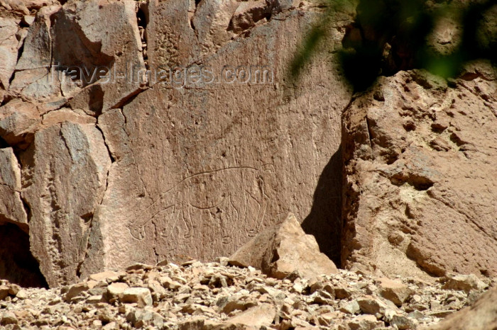 chile72: Chile - outside San Pedro de Atacama (Antofagasta region): petroglyph - lama - petroglifo - photo by N.Cabana - (c) Travel-Images.com - Stock Photography agency - Image Bank