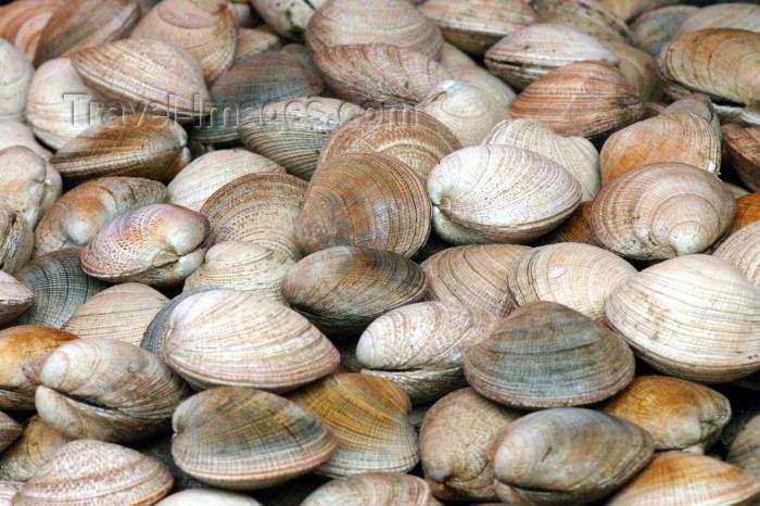 chile90: Valdivia, Los Rios, Chile: clams - fish market - sea food - photo by N.Cabana - (c) Travel-Images.com - Stock Photography agency - Image Bank