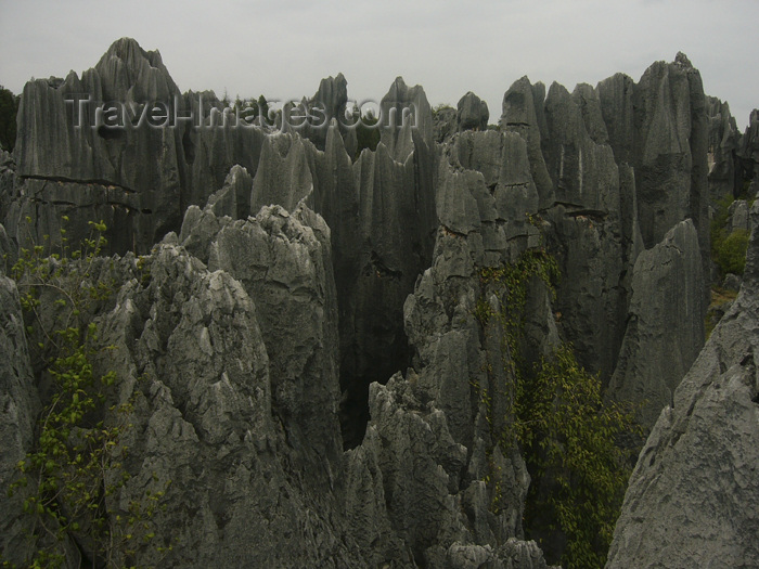 china226: Kunming, Yunnan Province, China: Shilin - forest of limestone spikes - karstic formation similar to the Tsingy de Bemaraha in Madagascar - photo by M.Samper - (c) Travel-Images.com - Stock Photography agency - Image Bank